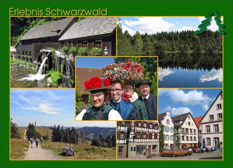 Postkarte Schwarzwald Gruen